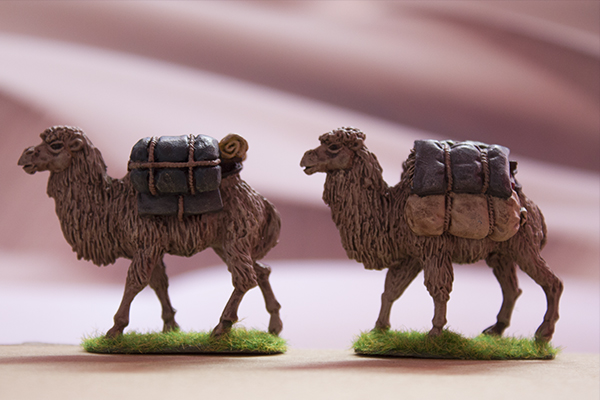 Asian pack camel